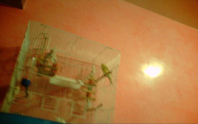 la nouvelle cage de ange  Image_10