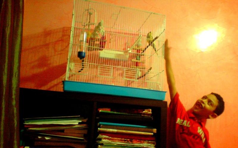 la nouvelle cage de ange  Image_11