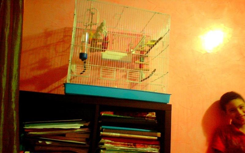 la nouvelle cage de ange  Image_12