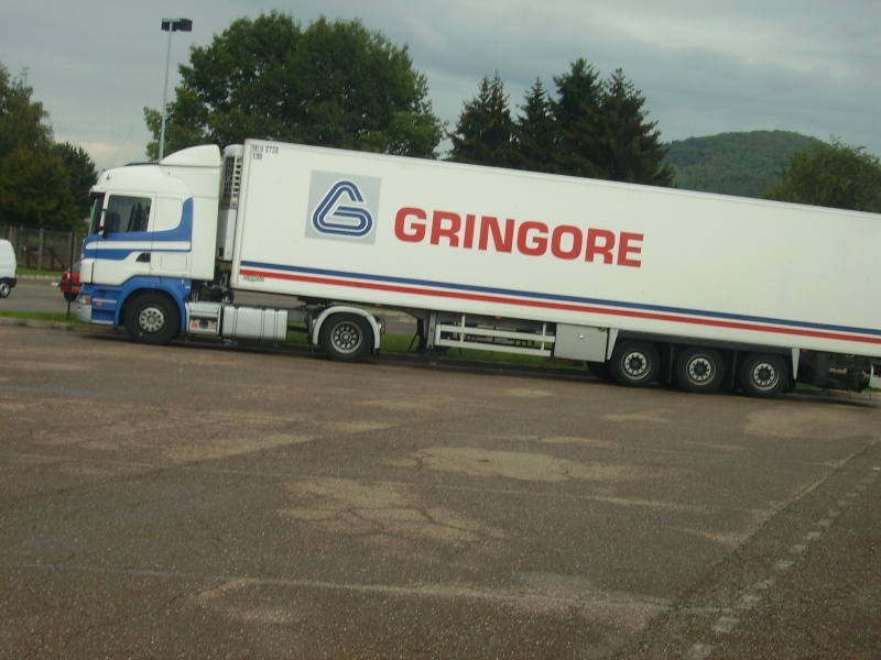 Gringore (Ifs, 14) Pict0443