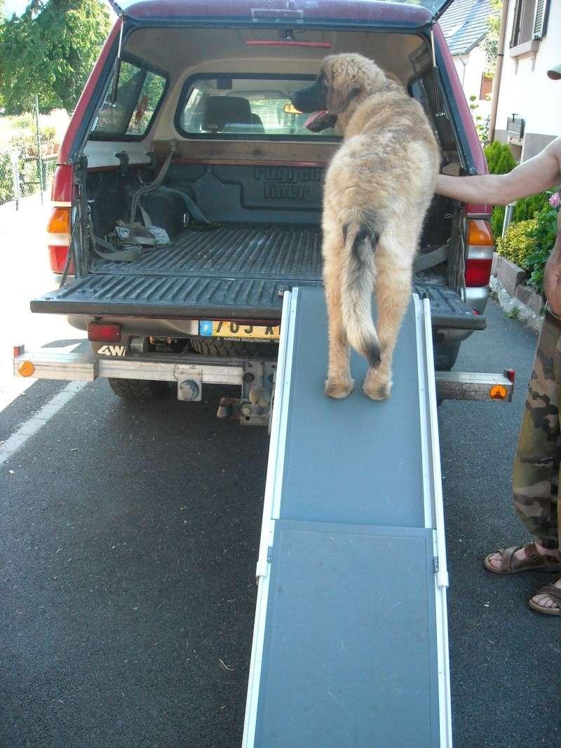 Les accessoires de vos animaux en particulier les chiens.  01212