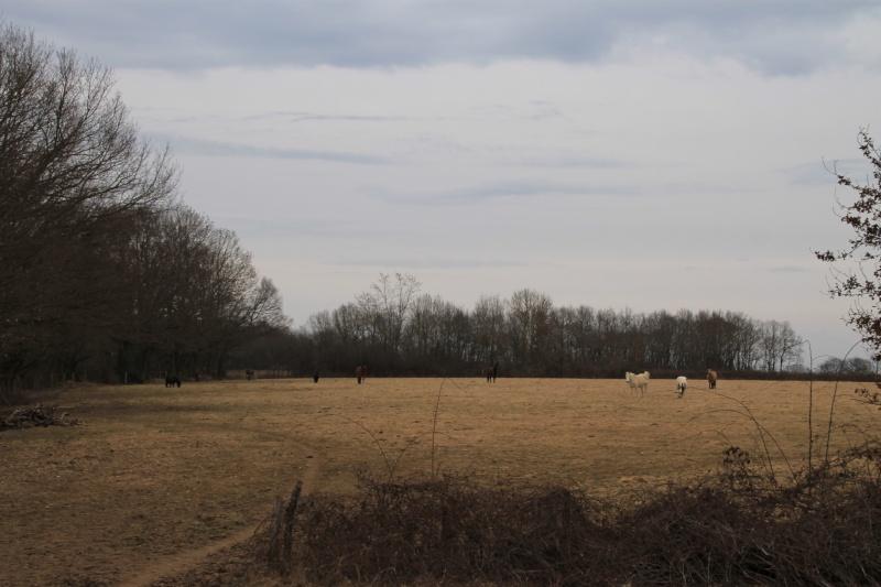 petites photos et vidéos du troupeau Img_3610
