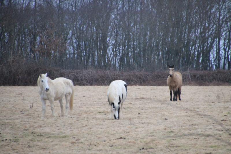 petites photos et vidéos du troupeau Img_3611