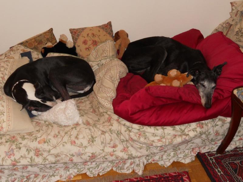 Niebla est devenue Lola et vit dès ce soir avec Perla! Dscn0017