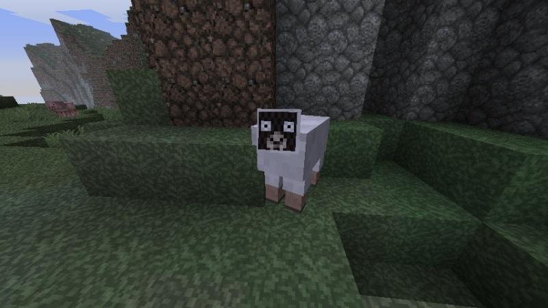 I dislike this sheep 2011-010