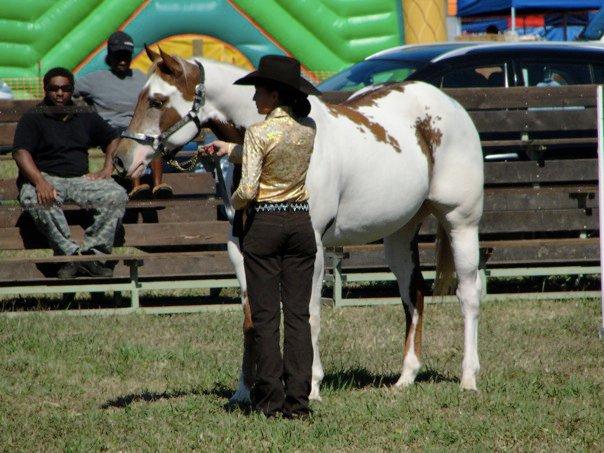 Quelques Paint Horse de Nouvelle Calédonie Count10