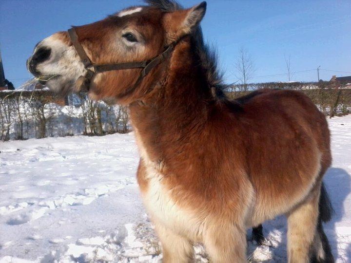Concours Photos Décembre : Le Cheval et la Neige 16527110