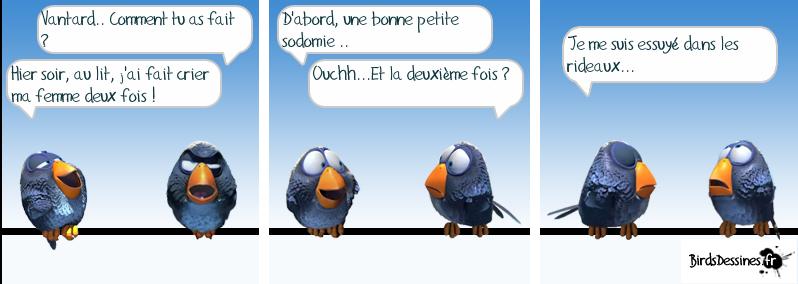 Les Birds Dessinés 13349111