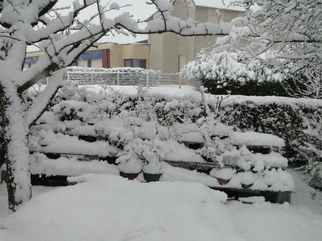 la neige sur mes arbres Dsc01211