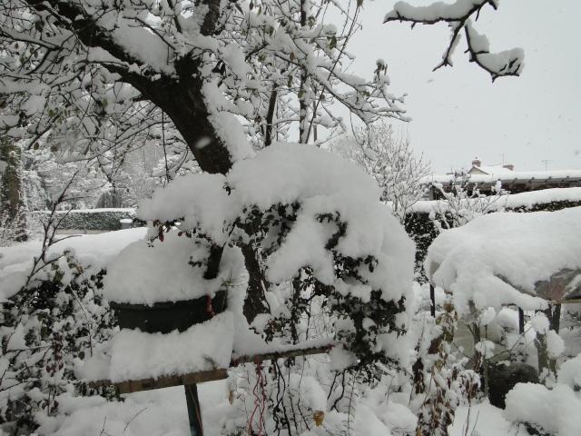 la neige sur mes arbres Dsc01212