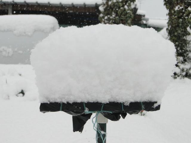 la neige sur mes arbres Dsc01213