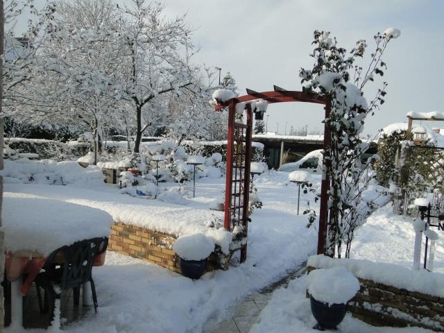 la neige sur mes arbres Dsc01310
