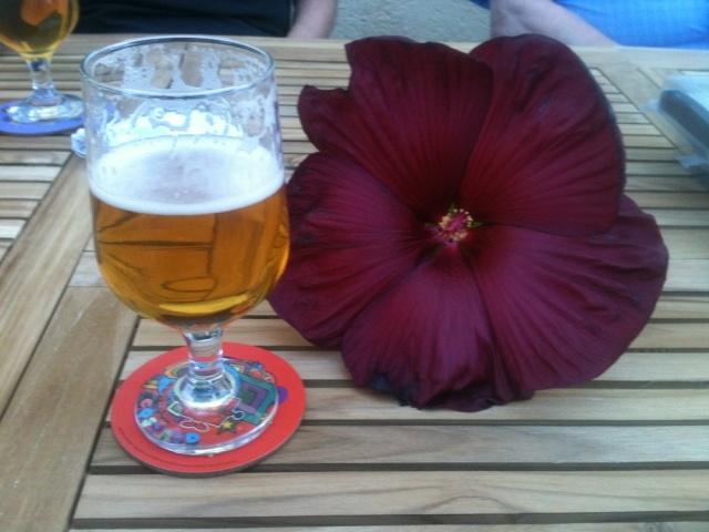 hibiscus rafraichissant Hibisc10