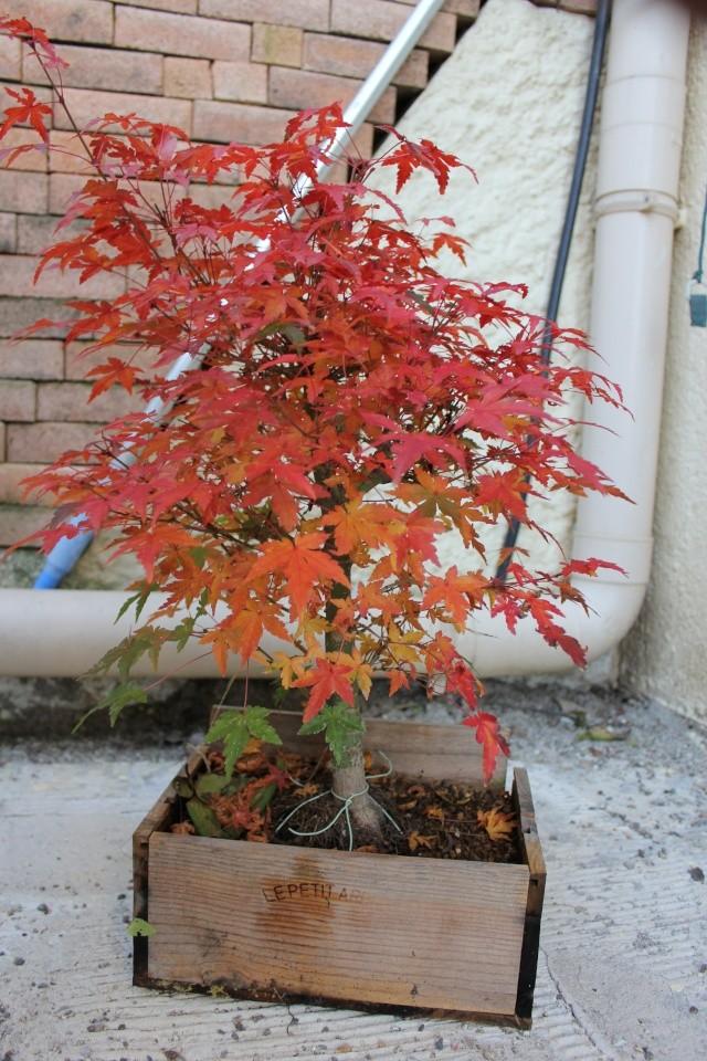 couleurs d'automne Img_1510