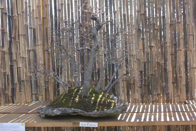 arboretum mialet 10mars 2012 Img_1516