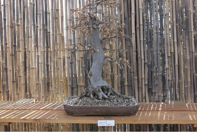 arboretum mialet 10mars 2012 Img_1517