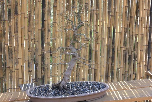 arboretum mialet 10mars 2012 Img_1518