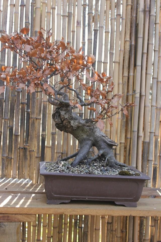 arboretum mialet 10mars 2012 Img_1519