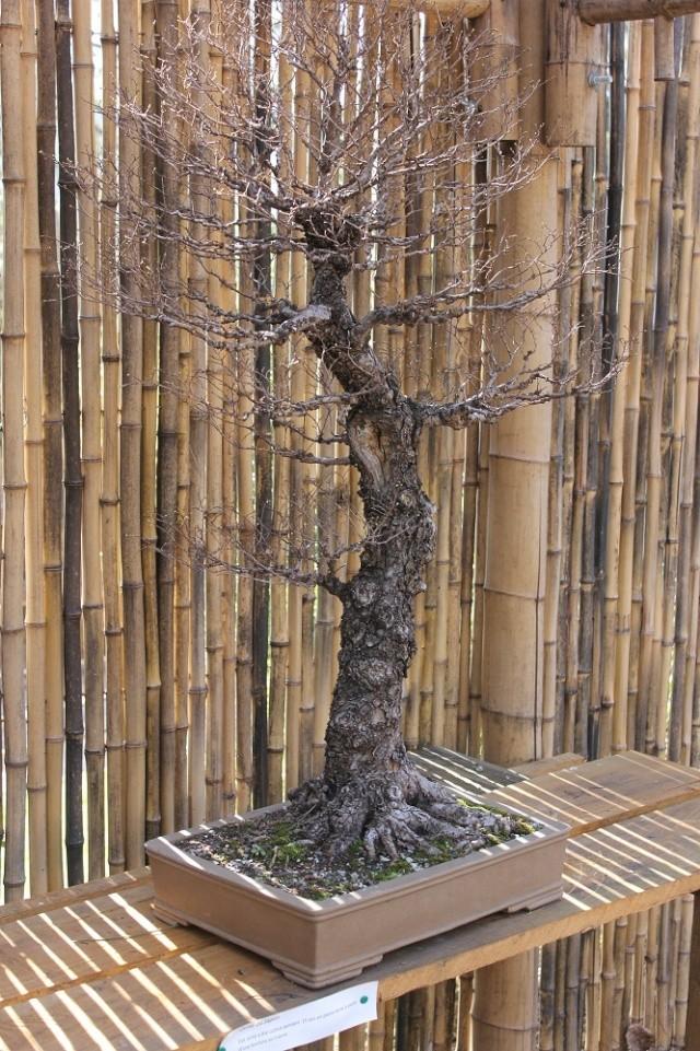 arboretum mialet 10mars 2012 Img_1521