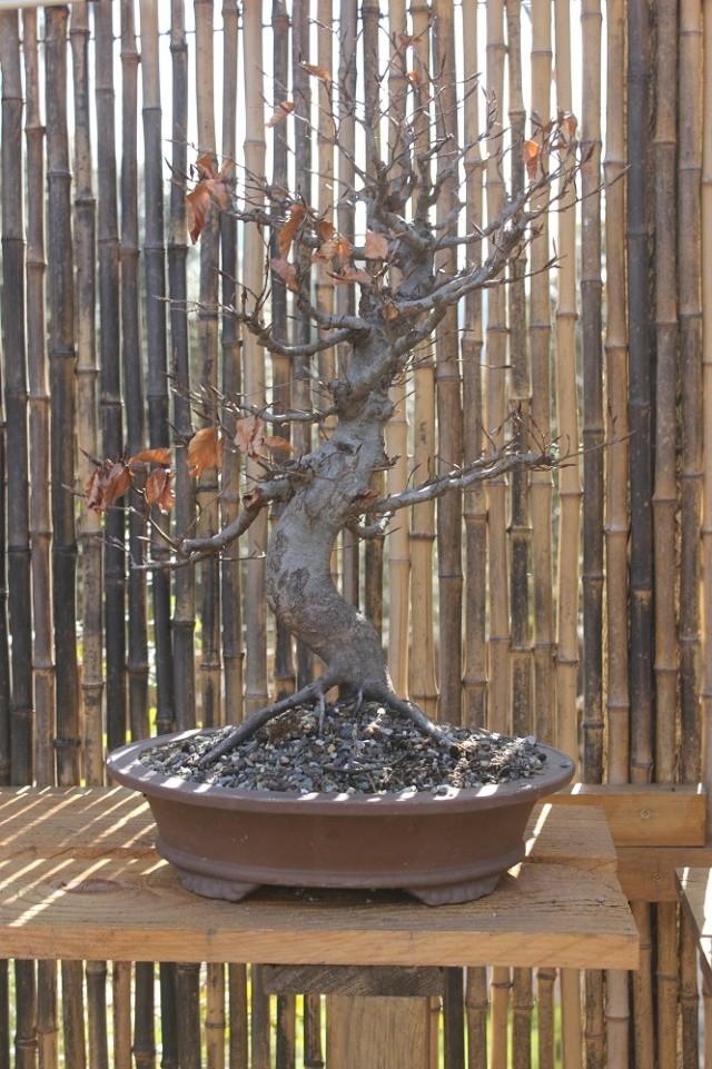 arboretum mialet 10mars 2012 Img_1522