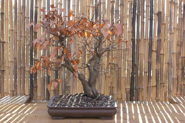 arboretum mialet 10mars 2012 Img_1523