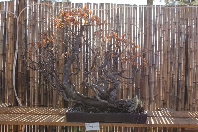 arboretum mialet 10mars 2012 Img_1524