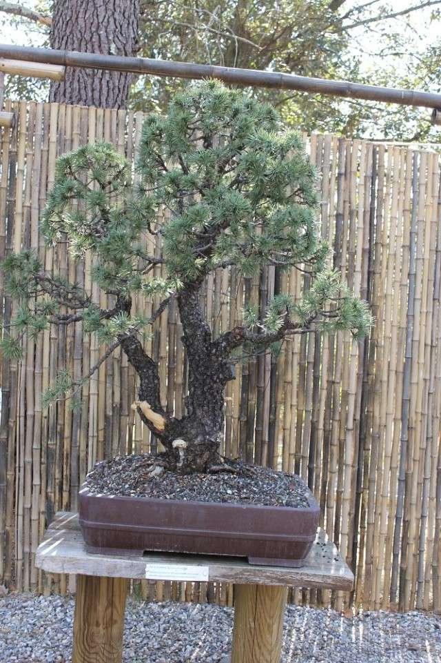 arboretum mialet 10mars 2012 Img_1525