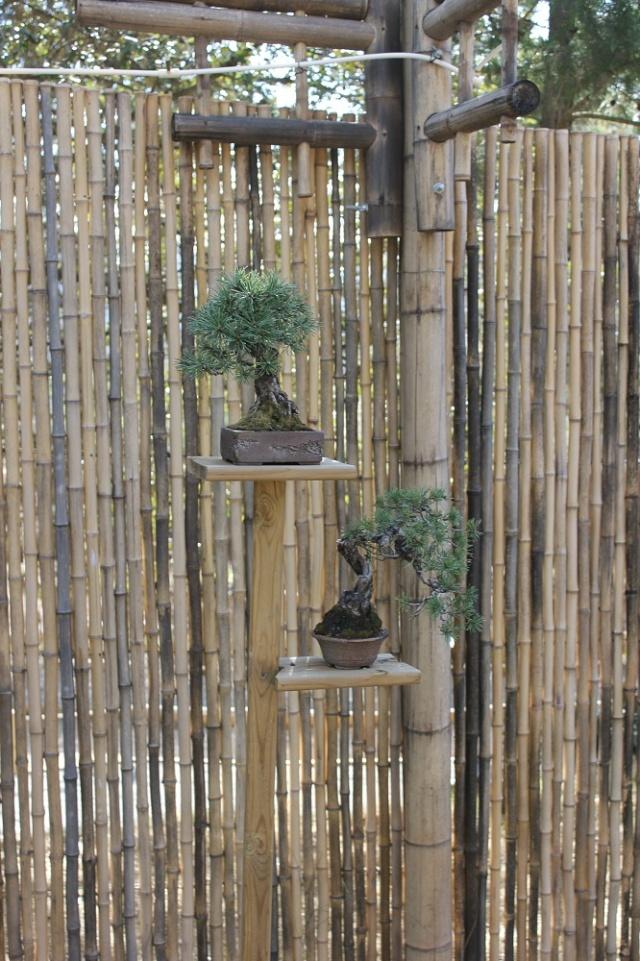 arboretum mialet 10mars 2012 Img_1526