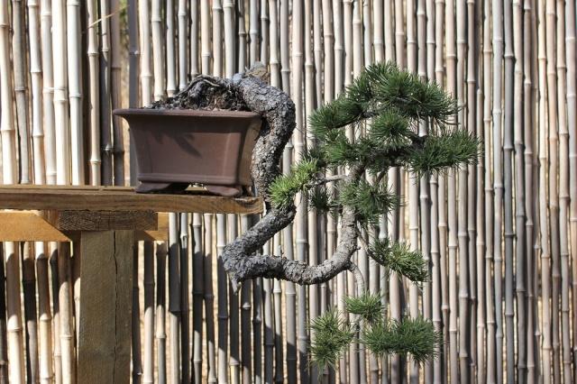 arboretum mialet 10mars 2012 Img_1612