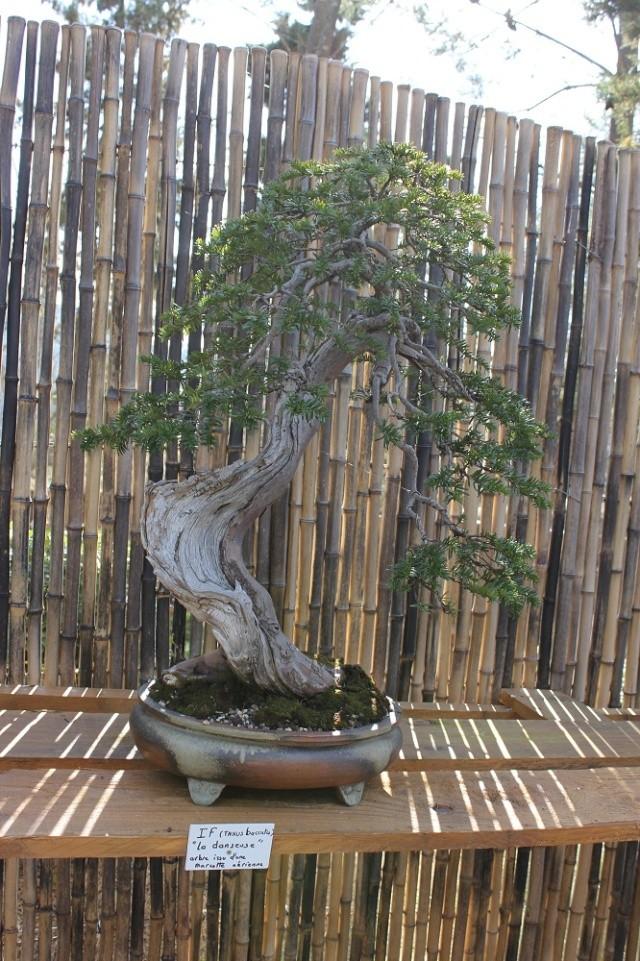 arboretum mialet 10mars 2012 Img_1613