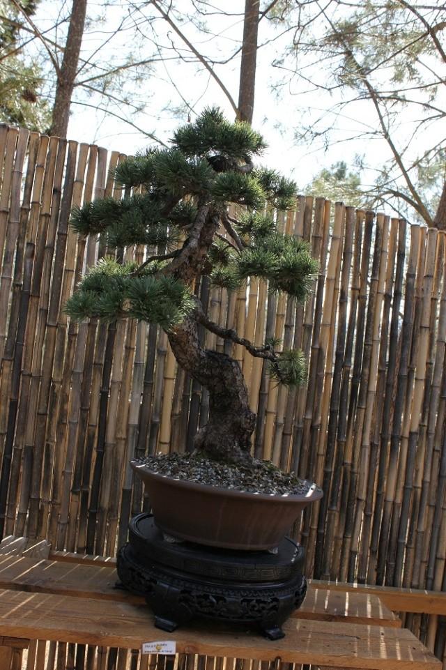 arboretum mialet 10mars 2012 Img_1614