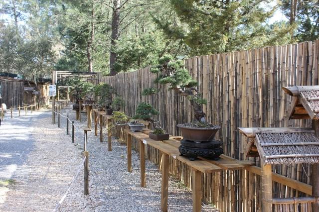 arboretum mialet 10mars 2012 Img_1615
