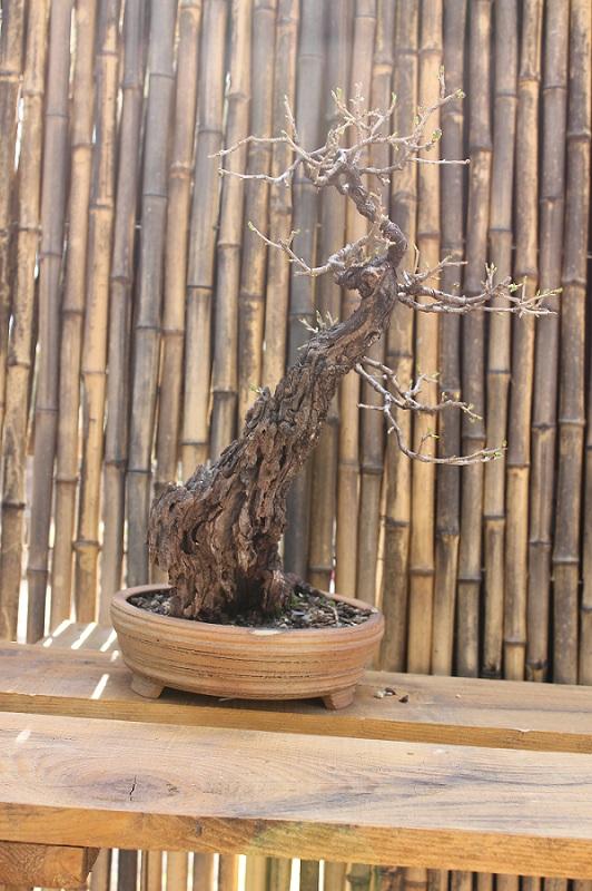 arboretum mialet 10mars 2012 Img_1617