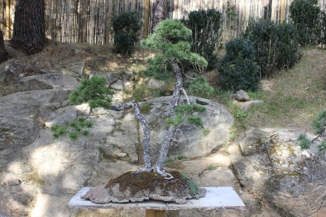 arboretum mialet 10mars 2012 Img_1618