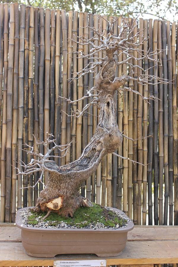 arboretum mialet 10mars 2012 Img_1619