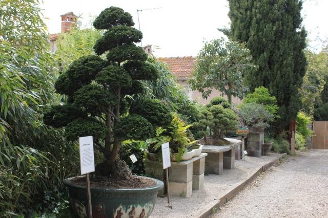 musée du bonsai BIOT avril 2012 Img_2012