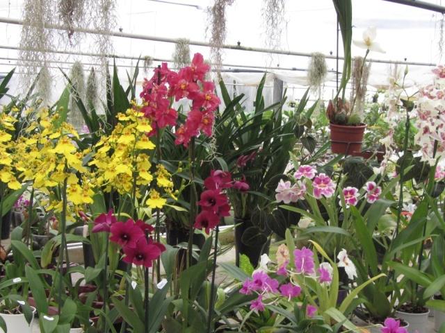 musée du bonsai BIOT avril 2012 Img_3810