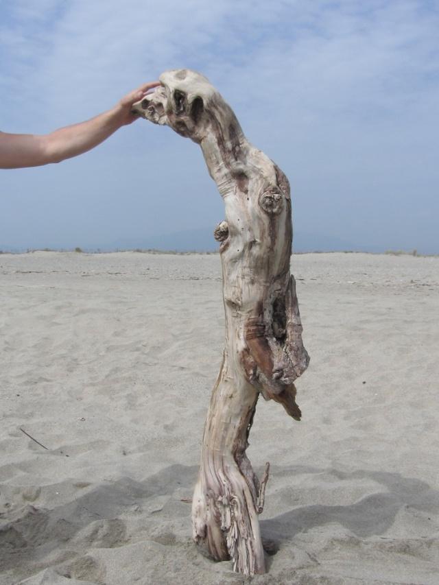 bois mort tanuki Img_4811