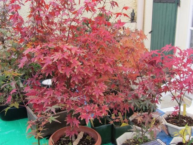 couleurs d'automne Img_7411