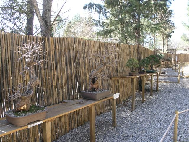 arboretum mialet 10mars 2012 P3109510