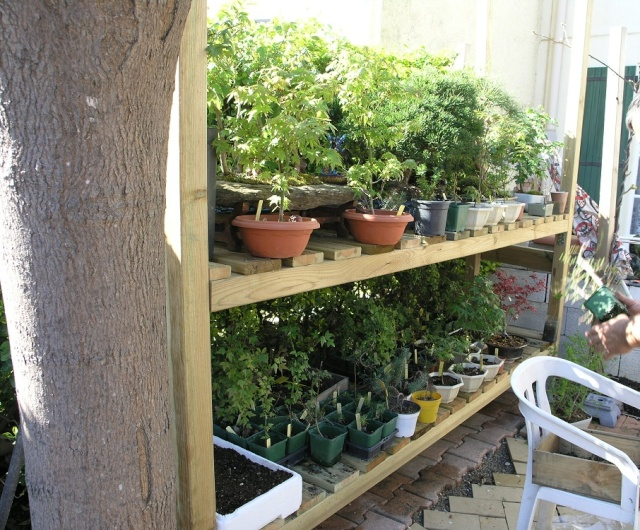 Mes plants P3310211