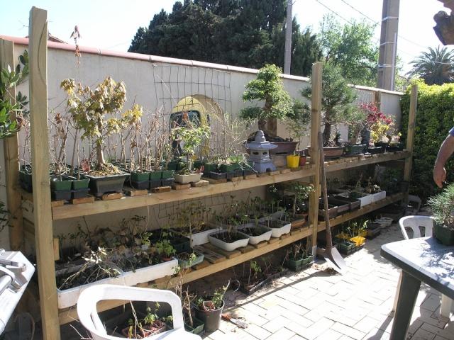 Mes plants P3310212