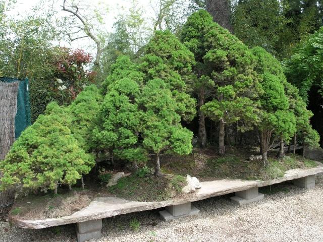 musée du bonsai BIOT avril 2012 P4280410