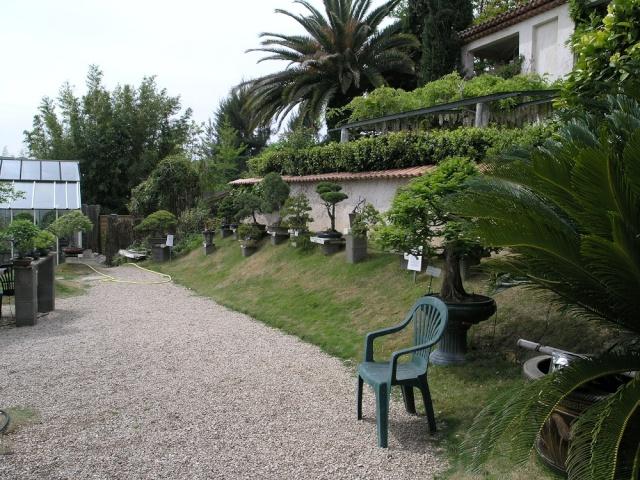 musée du bonsai BIOT avril 2012 P4280412