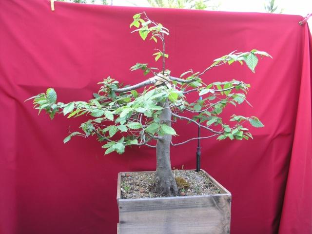 yama de mon jardin  P5050412