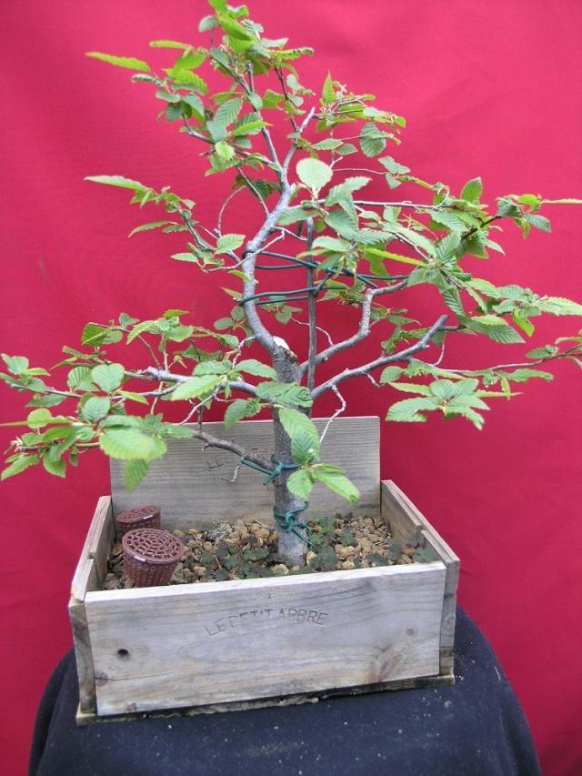 yama de mon jardin  P5050413