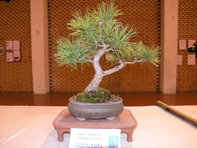 exposition Toulouges les 23-24 juin 2012 par  Le club Kobayashi  P6230510