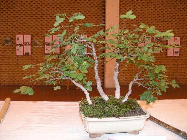 exposition Toulouges les 23-24 juin 2012 par  Le club Kobayashi  P6230517