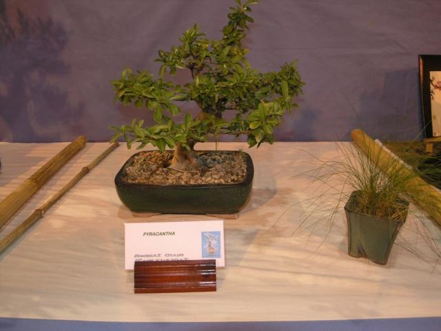exposition Toulouges les 23-24 juin 2012 par  Le club Kobayashi  P6230518