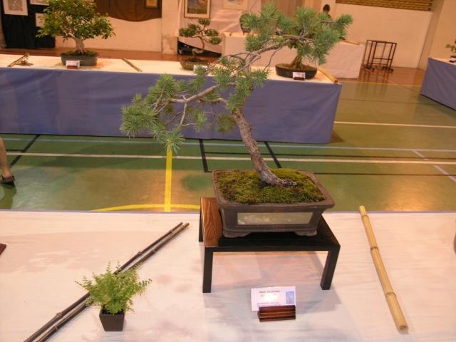 exposition Toulouges les 23-24 juin 2012 par  Le club Kobayashi  P6230615
